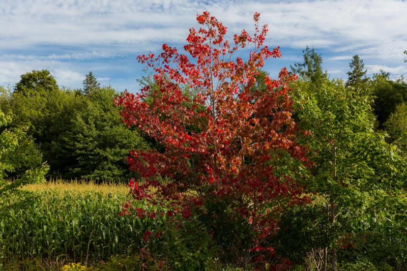 Nova Scotia Blomidon Park
